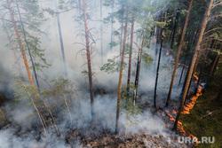 Лесной пожар на озере Глухое. Свердловская область, лес горит, лесной пожар, пожар в лесу, низовой пожар