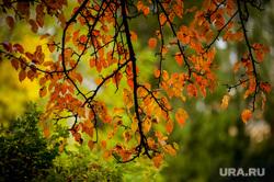 Осень в Екатеринбурге, осень