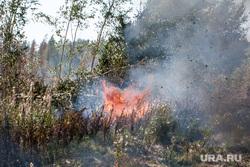 Горят торфяники. Тюмень, лесной пожар, горит лес, горят торфяники, торфяники горят