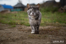 Верхотурье, Меркушино, Актай, Свято-Косминская пустынь., кошка, кот, домашние животные, бродячие животные