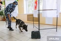 Обучение действиям УИК при возникновении нештатных ситуаций в дни голосования. Челябинск, кинолог, служебная собака, бомба, минирование, сву, полиция, избирательный участок, бесхозный предмет, овчарка, взрывное устройство, розыскная собака