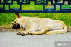 Обстановка в городе во время эпидемии коронавируса. Челябинск, собака, спит, бродячая собака