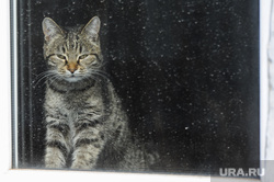 Канализационные стоки в поселке Трубный, Сосновского района Челябинской области, кошка, кот, стекло, домашнее животное, окно