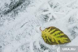 Первый снег. Тюмень, снег, осень, желтый лист