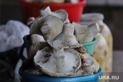 Некрасовский рынок.  Курган , грузди, грибы