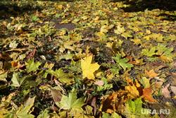 Осенний репортаж. Екатеринбург, желтые листья, осень, осенняя погода, осенние листья
