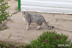 Поселок Энергетики Курган, кошка