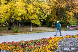 Осень. Тюмень, клумба, парк, листья, желтые листья, осень, листья желтые