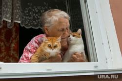 Клипарт, разное. Курган, пенсионер, кошки, старость, домашние животные, домашние питомцы, пожилая женщина, забота, окно