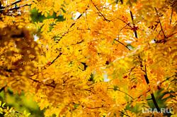 Золотая осень. Бабье лето. Челябинск, сквер, рябина, парк, бабье лето, золотая осень, природа, осень