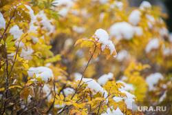 Виды города. Екатеринбург, снег, желтые листья, осень