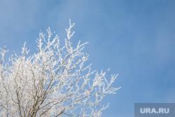 Виды города. Тобольск, зима, погода, небо, заморозки, иней на деревьях, весна