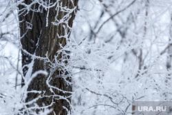 Зима в Кургане, зима, заморозки, ветви деревьев в снегу, деревья в снегу