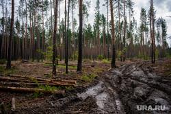 Незаконная вырубка леса. Свердловская область, поселок Рассоха, деревья, лес, вырубка леса, поселок рассоха, вырубка деревьев