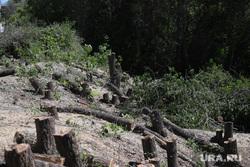 Вырубка деревьев на набережной в Центральном парке культуры и отдыха. Курган, деревья, пень, пни, вырубка кустов, зеленые листья, вырубка деревьев, спил деревьев