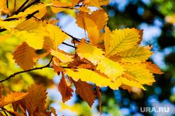 Золотая осень. Бабье лето. Челябинск, сквер, парк, бабье лето, золотая осень, природа, осень