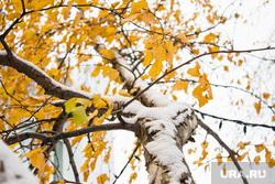 Первый снег. Нижневартовск, зима, погода, желтые листья, первый снег