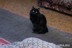 Разное. Курган, кошка, домашнее животное, домашние питомцы, черный кот, котик