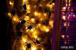 Украшения к Хэллоуину в заведениях Екатеринбурга, пауки, хэллоуин, helloween, жуки