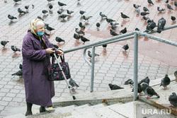 Дождливый день. Тюмень, пенсионерка, бабушка, пенсия, пожилые люди, голуби, пенсионеры, бабушка с тростью