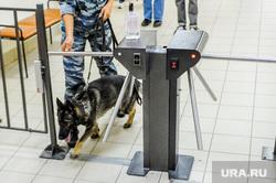 Обучение действиям УИК при возникновении нештатных ситуаций в дни голосования. Челябинск, кинолог, служебная собака, безопасность, турникет, система безопасности, полиция, школа, овчарка, розыскная собака