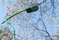 Парк Зеленая роща. Екатеринбург, уличное освещение, фонарь освещения