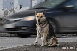 Виды города. Курган, собака, машина, бездомные животные, бездомная собака