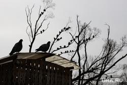 Затопленный Дендрологический парк. Екатеринбург, голуби, птицы на деревьях