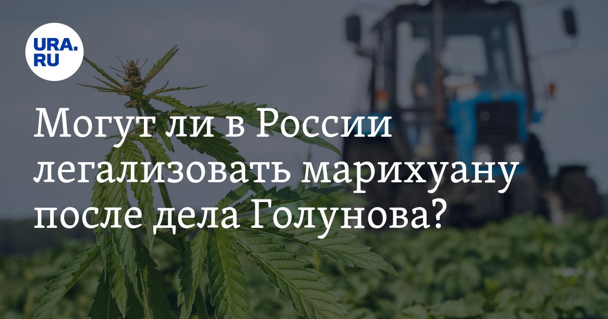 Будут ли в россии легализовать марихуану комнатная конопля